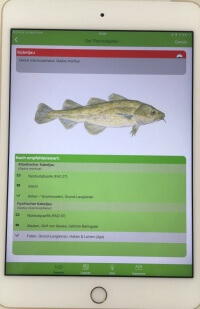 Fischratgeber Greenpeace