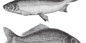 Leere Meere, volle Netze: Geht Fisch essen auch umweltfreundlich?